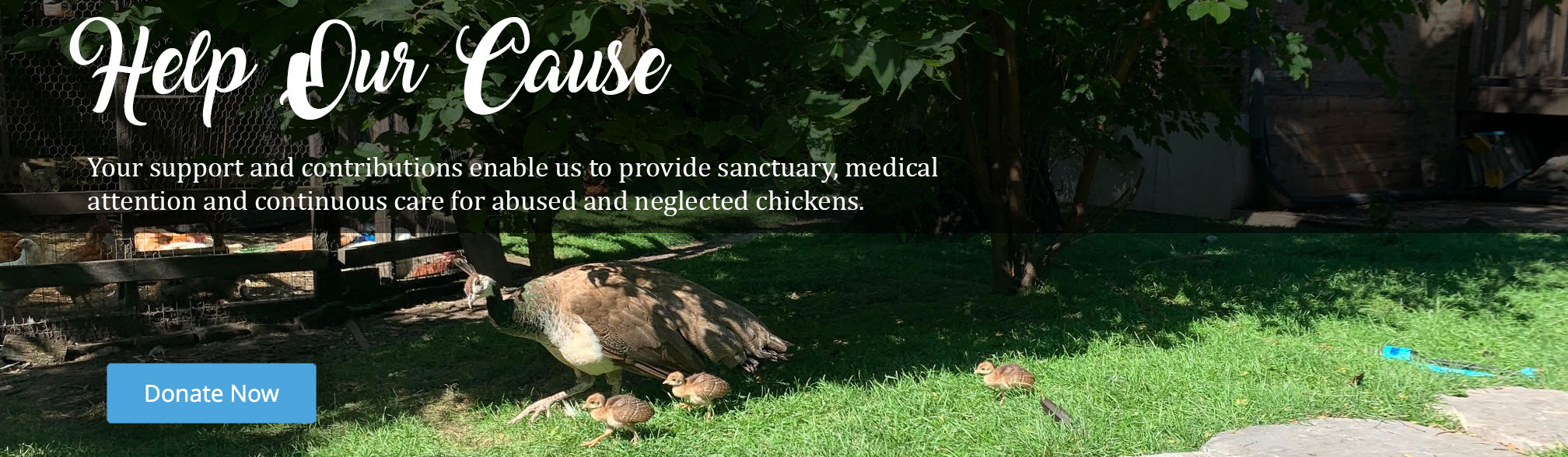 Donate to the Chicago Chicken Rescue